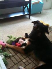 Colby Toys